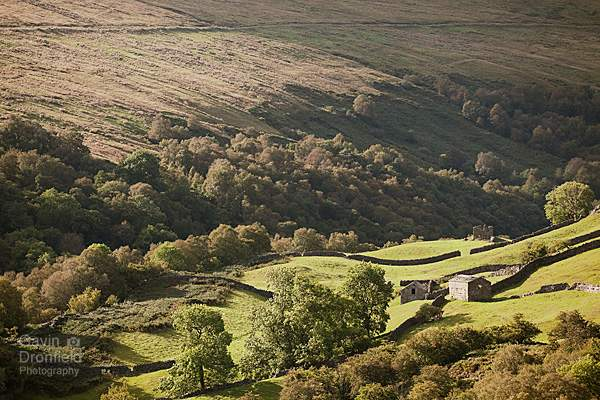 Birkbeck Wood in the Gunnerside Gill valley in summertime