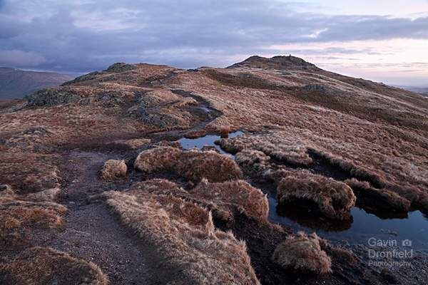Place Fell peat bog in dawn light