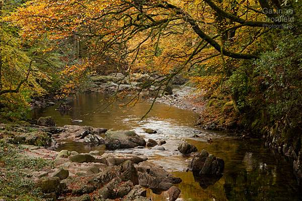 River Esk flows through golden autumn Eskdale woodland