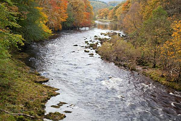 River Wharfe in autumnal Strid Woods