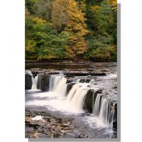 Aysgarth Upper falls amongst colourful autumn trees