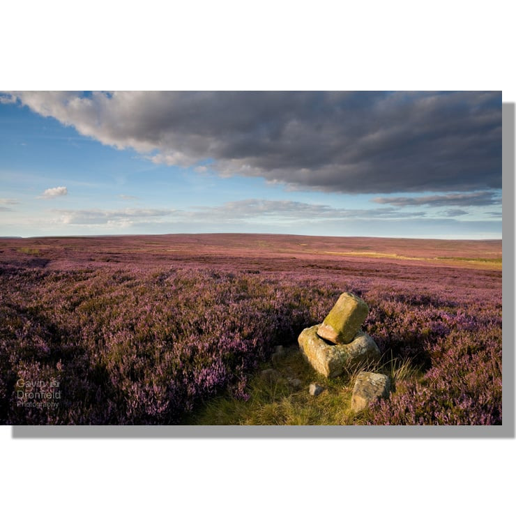 Roppa Cross North in heather on Helmsley Moor during August sunset