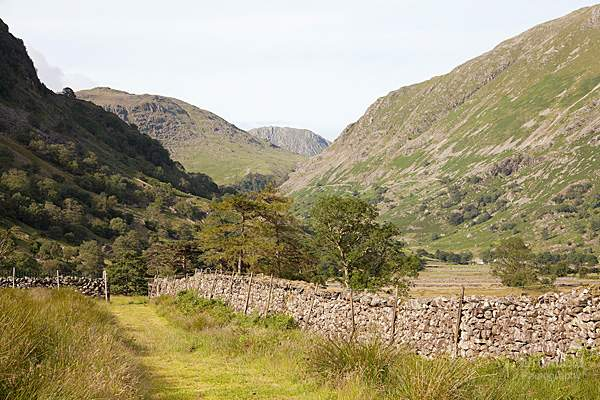 allerdale ramble footpath through borrowdale meadows in summertime under base brown