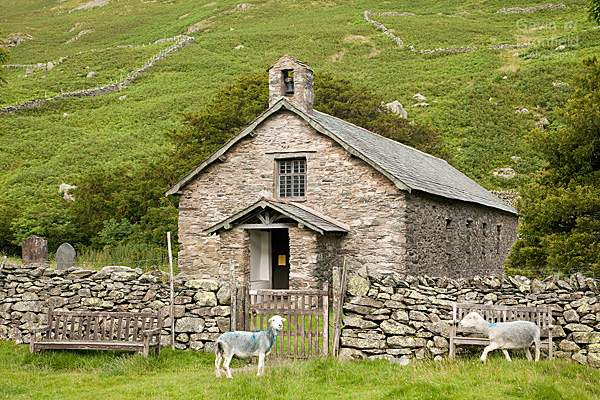 st martins old church in martindale from outside the front gate with two herdwick sheep