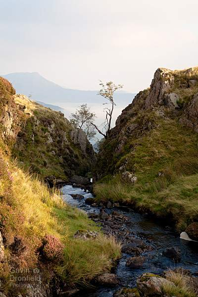 newlands beck winding its way through gorge of newlands beck with causey pike rising above dawn mist