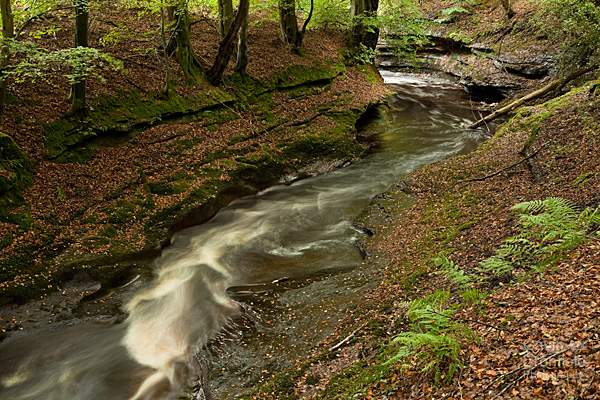 river gelt in gelt woods in early autumn