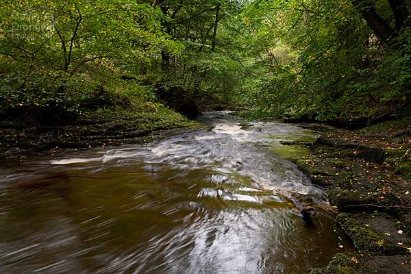 river gelt flowing through autumnal beech trees in gelt woods