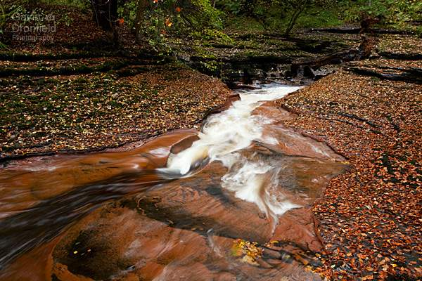 rapids in river gelt as it flows through leaf covered sandstone gorge