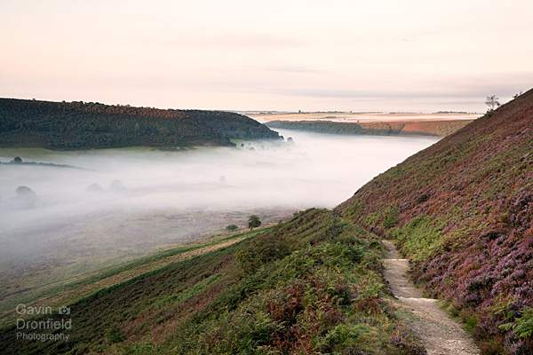 atmospheric dawn mist in the Hole of Horcum with heather in flower