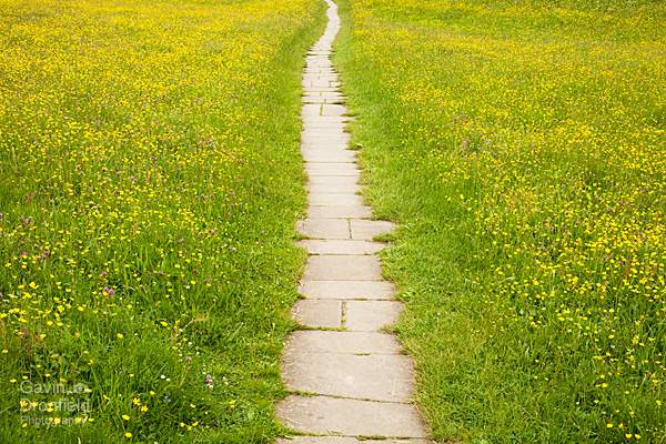 Muker meadow paved path through buttercups