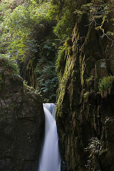 Stanley Ghyll Force waterfall in verdant gorge