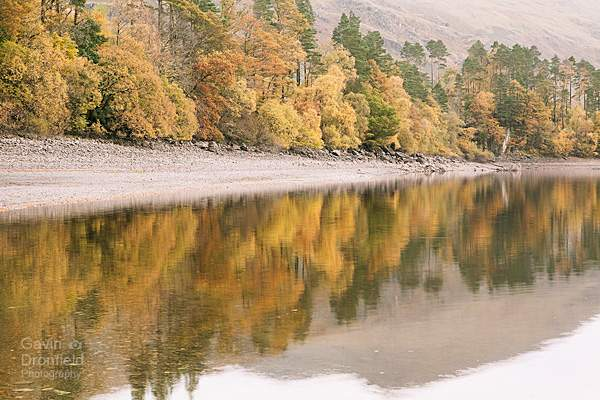 woodland reflections on Thirlmere Reservoir shoreline