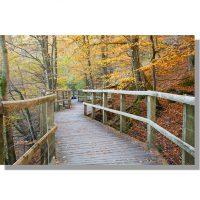 Autumnal River Greta walkway on the Keswick Threlkeld cycle path