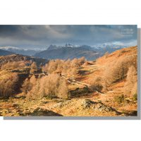 walled track from torver intake leading towards lingmoor and snow-capped langdale pikes under leaden winter skies