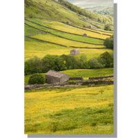Thwaite barns in summer buttercup meadows
