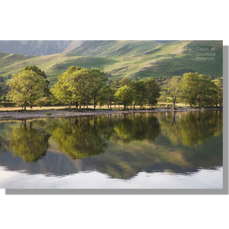 Summer Buttermere ash and oak tree reflections