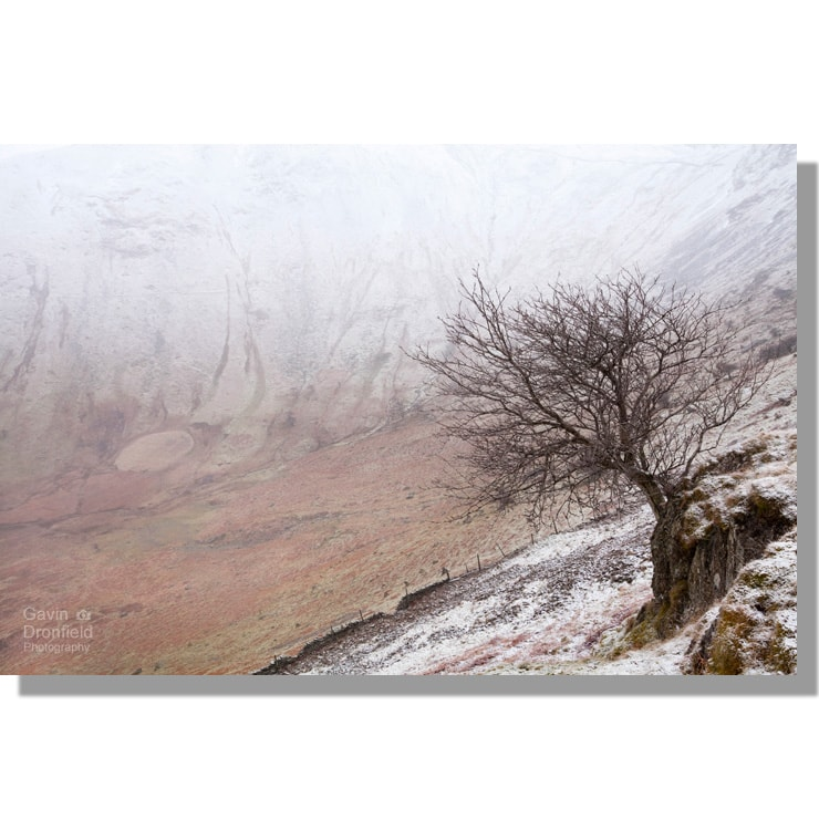 Wintry Bannerdale with hawthorn tree clinging to a crag in snow blizzard