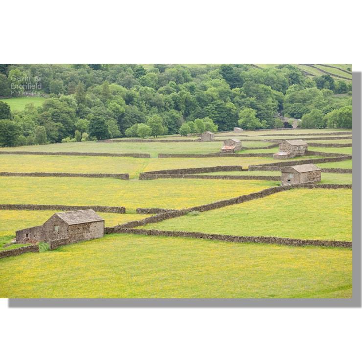Gunnerside barns in flowering summer meadows