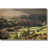 Birkbeck Wood in the Gunnerside Gill valley in summertime