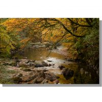 River Esk flows through golden autumn Eskdale woodland from Trough House Bridge