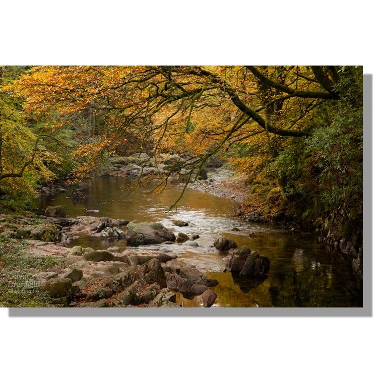 River Esk flows through golden autumn Eskdale woodland from Trough House Bridge