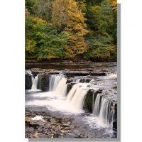 Aysgarth Upper falls amongst colourful autumn trees