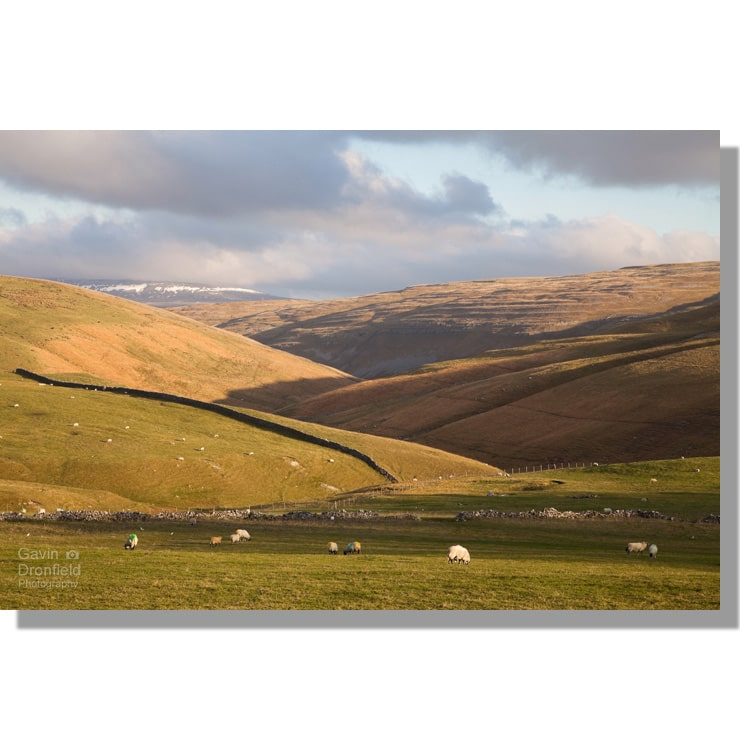 cowside beck valley zigzags towards great whernside in winter light