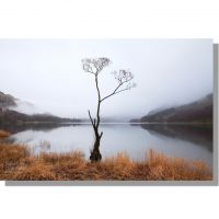 Buttermere lone tree in calm winter mist