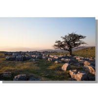 winskill stones limestone pavement and hawthorne tree at sunset