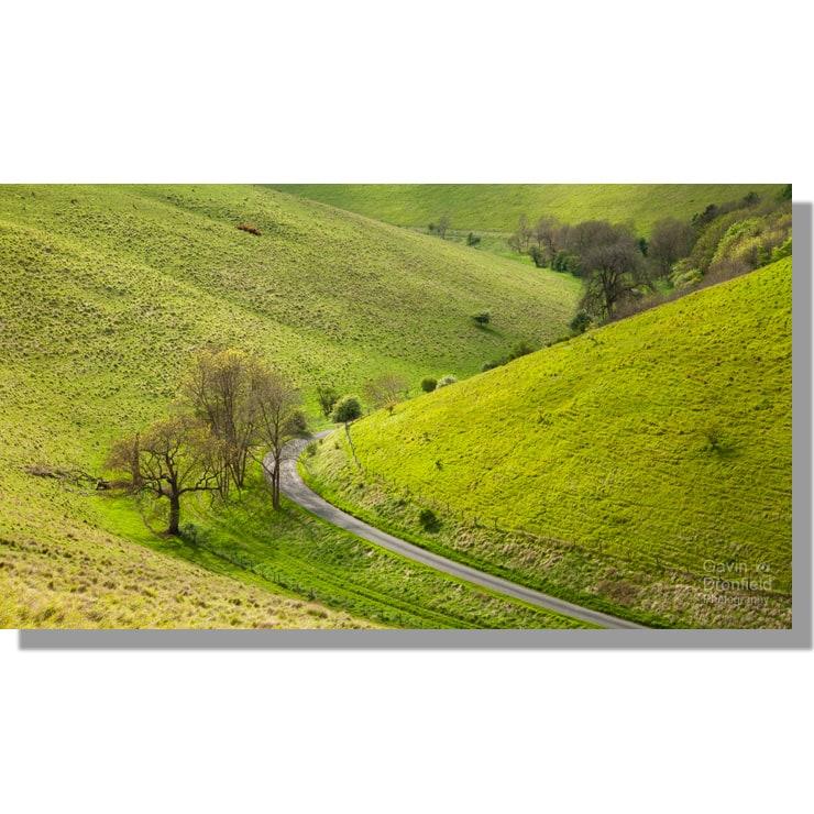 pocklington lane running through verdant pasture dale