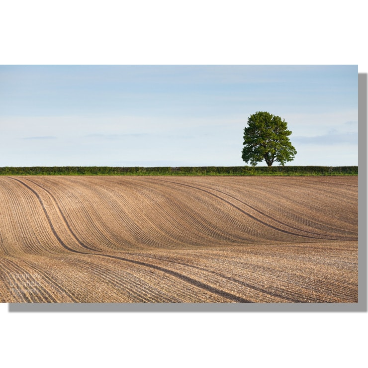 pattern of freshly ploughed furrows near huggate in spring