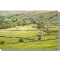 Muker barns in yellow summer swaledale meadows