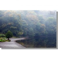 autumnal dawn mists at red bank wood on the shore of grasmere