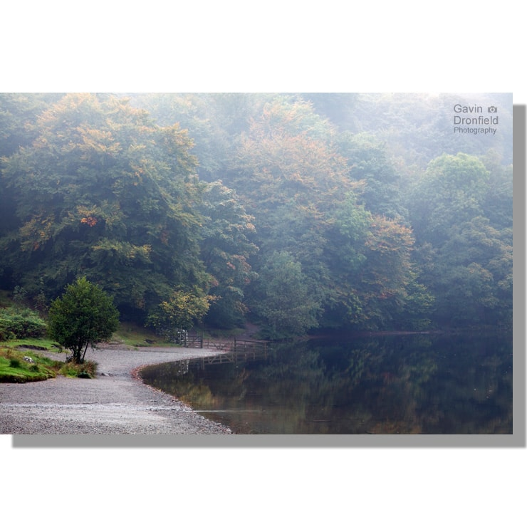 autumnal dawn mists at deerbolts woods on the shore of calm grasmere