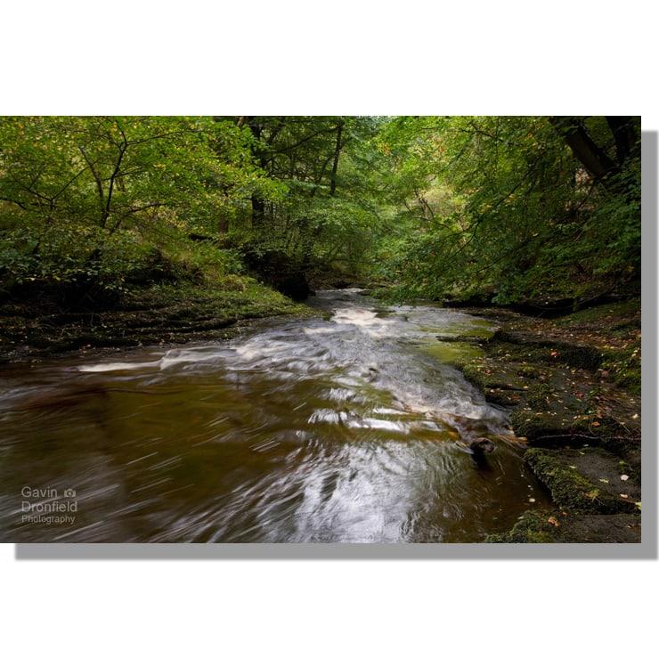 river gelt flowing through autumnal beech trees in gelt woods