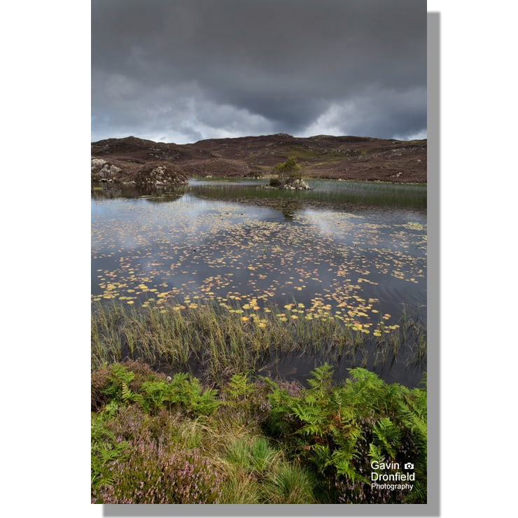 remote dock tarn amidst heather in flower under leaden grey skies