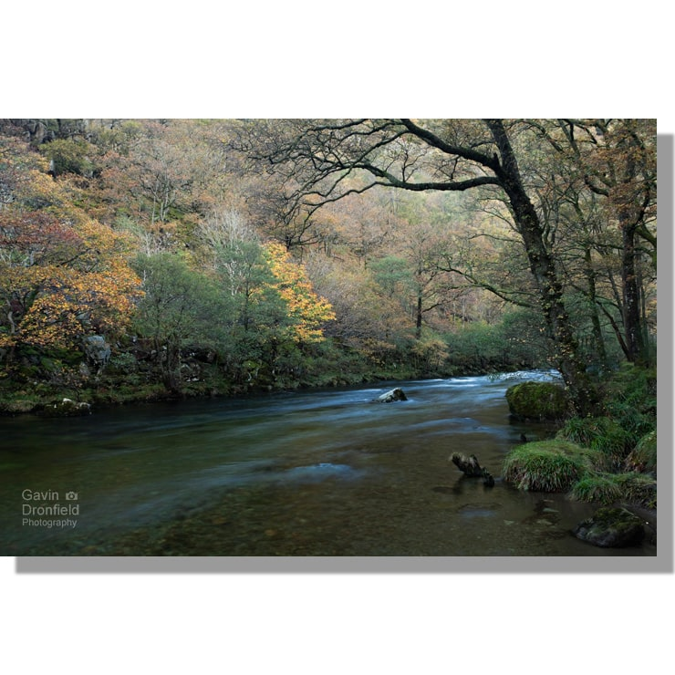river derwent flowing through dark atmospheric low hows wood in autumn