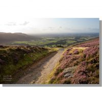 Ingleby Incline view of Teesdale from Ingleby Top in summer with flowering moorland heather