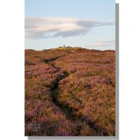 footpath through flowering heather to trig point on round hill summit on sunny summer day