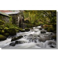 old mill cottage water wheel and coomb beck waterfalls under yellow autumn beech leaves canopy