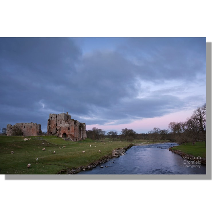 brougham castle medieval keep surrounded by grazing sheep beside river eamont under pink dawn skies