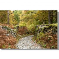 dry stone walled track through colouful autumn sawreys wood in little langdale