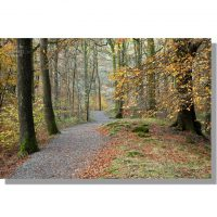 path leading through penny rock wood surrounded by yellow-leaved beech trees in autumn with red coloured leaf litter on the ground