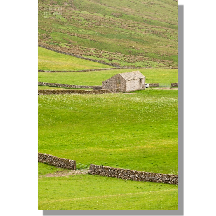 far barn in stockdale valley in buttercup filled green summer meadows bounded by dry stone walls
