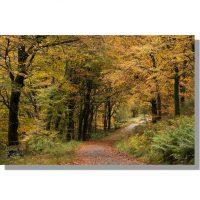 dodd wood track in darkness under coniferous trees