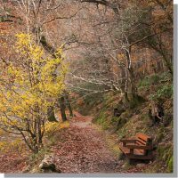 low wood footpath and bench in colourful woodland on wast water shore in autumn