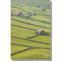 Littondale barns in summer meadows at Foxup