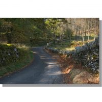 Little Langdale country lane in Sawreys Wood in autumn
