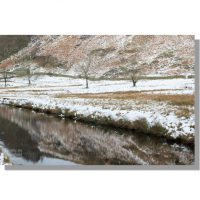 snowy trees reflected in Watendlath Beck
